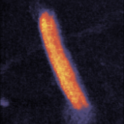 Correlative STED and AFM images of nanorulers
