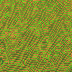 Qi Data 2015 03 30 14 13 01 514 Processed 2015 03 31 14 30 56 0 4X256 256 3 D 4 Adhesion Retrac1T